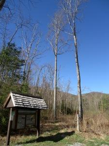 AT-VA Stony Creek Valley to Pearisburg 3