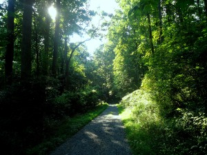 Kingsley Trail