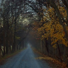 Imagine riding a horse & buggy up this road.