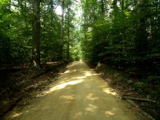 Walking the Forest Road to Avoid the Gunfire
