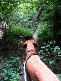 Sidekick Pauli scouts a Trail