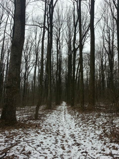 Walking back through the snowy woods.