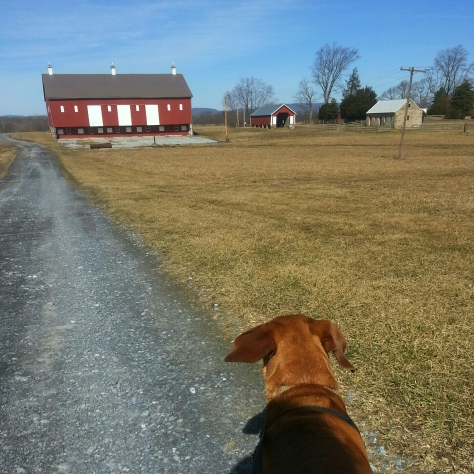 The wind made things cold for awhile...and it kept blowing Sidekick Pauli's ears from side to side!