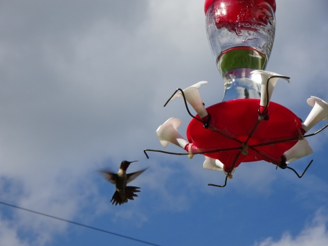 Love the Hummingbirds!