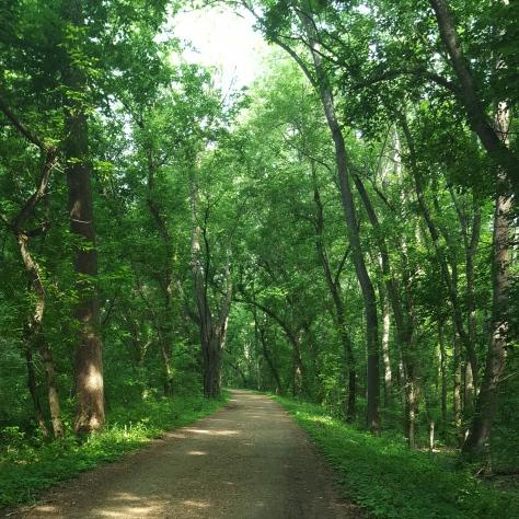 Big Trees, Shady Path
