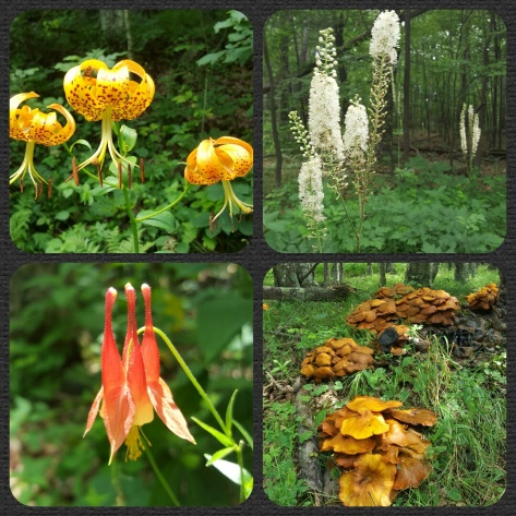 Wildflowers! And a Fungi!