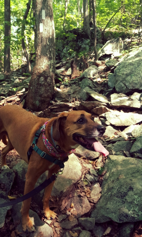 Are there ANY trails without rocks??? Sidekick Pauli is happy regardless!