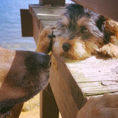 Sidekick Pauli makes a very tiny friend, Rocko